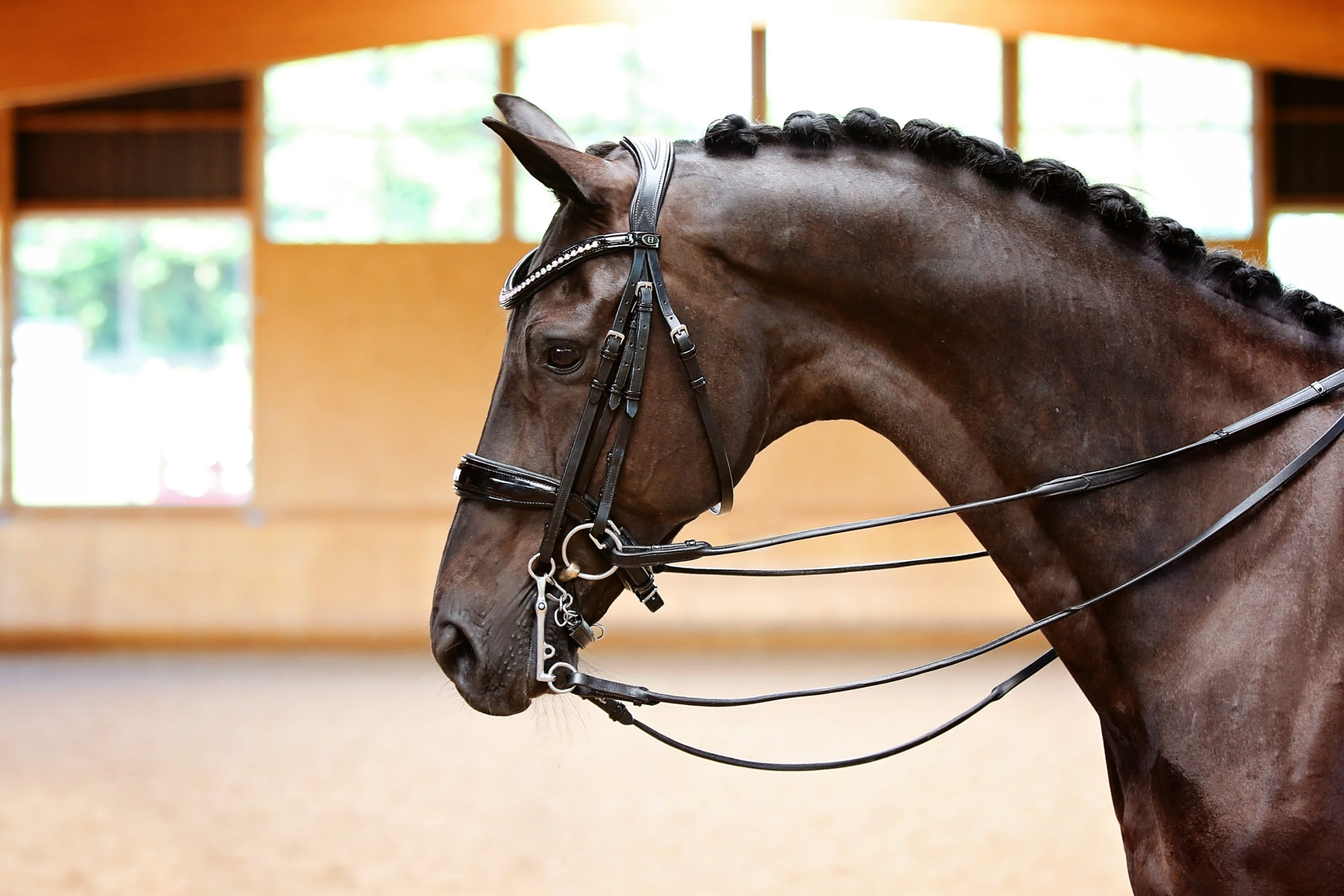Black Flat Leather Bridle