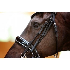 Silver Double Bridle