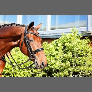 Orange Double Bridle