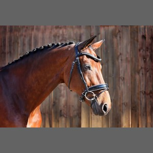 Silver Snaffle Bridle