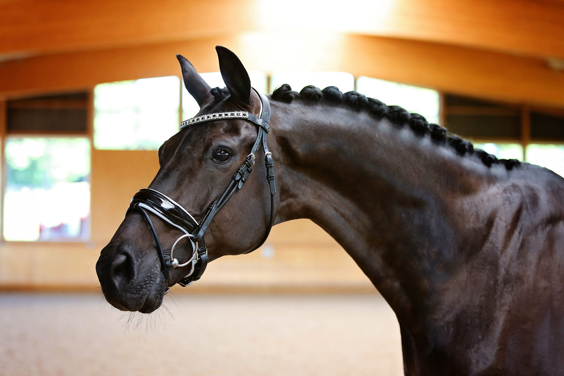 Black & White Rolled Leather Bridle
