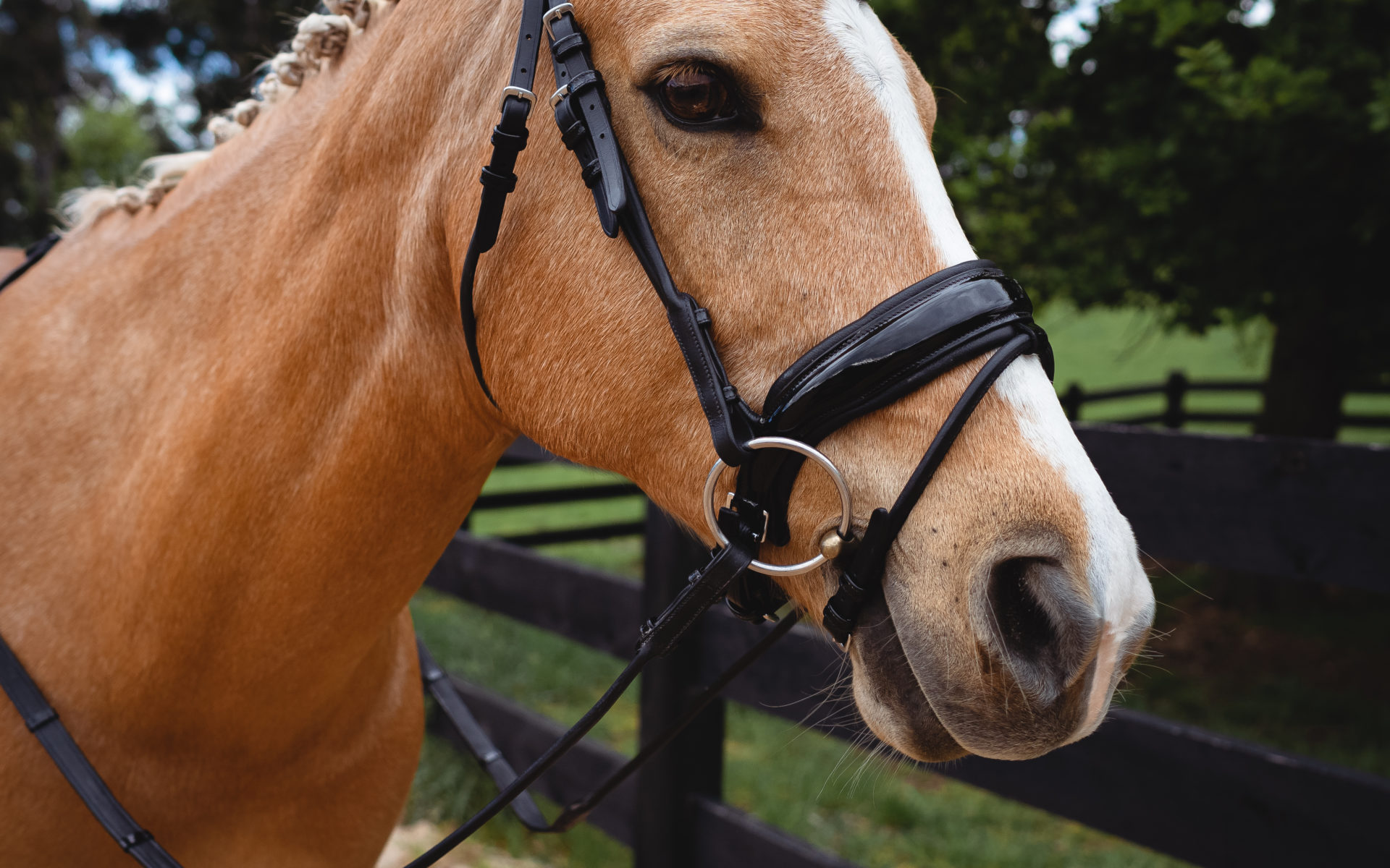 Snaffle Patent Bridle