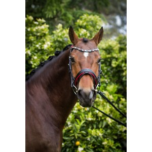 Red leather Bridle
