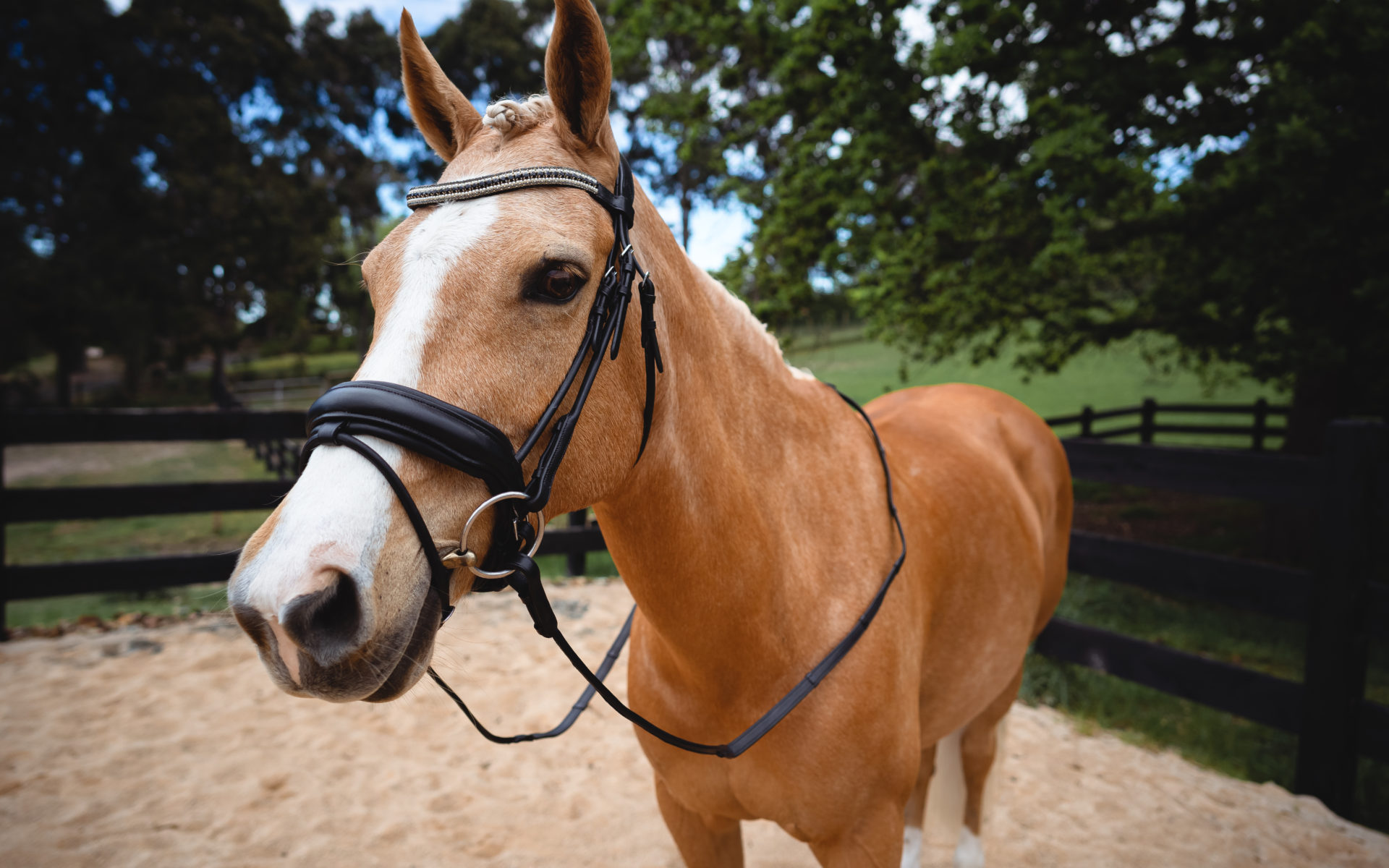 Pearl Snaffle Bridle