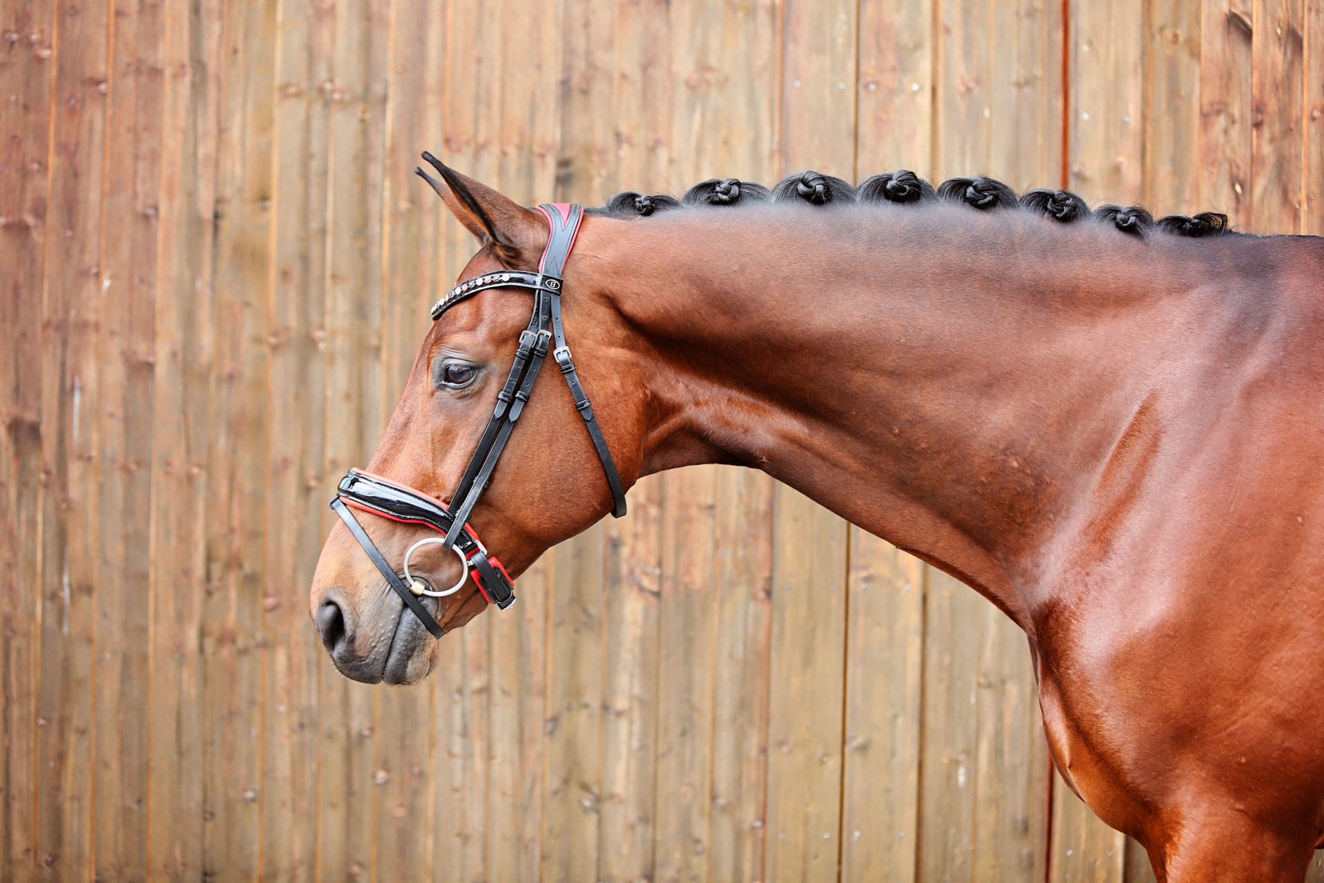 Snaffle Red Bridle