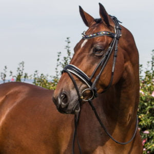 Multi Colour bridle