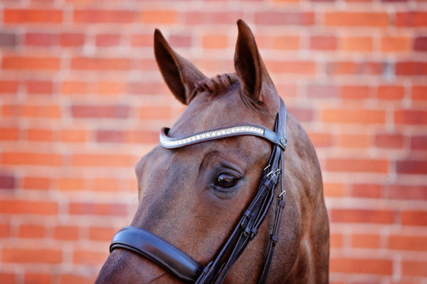 Majesty Browband