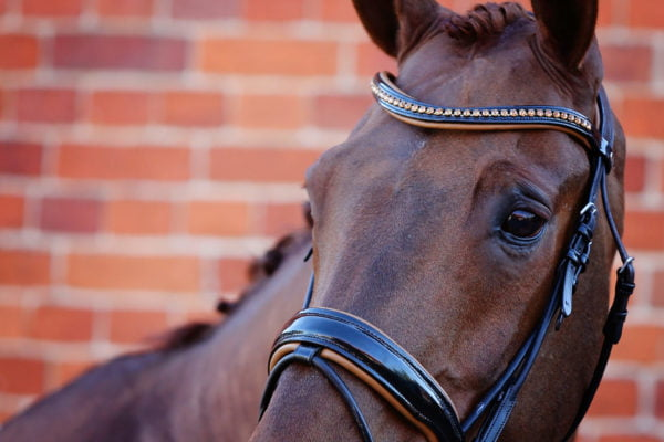 Black & Tan Bridle