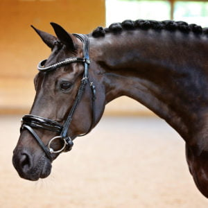 Black patent bridle