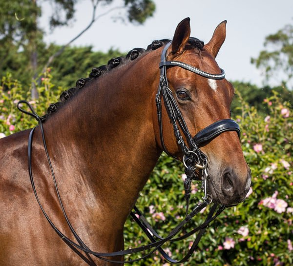 Flat leather bridle