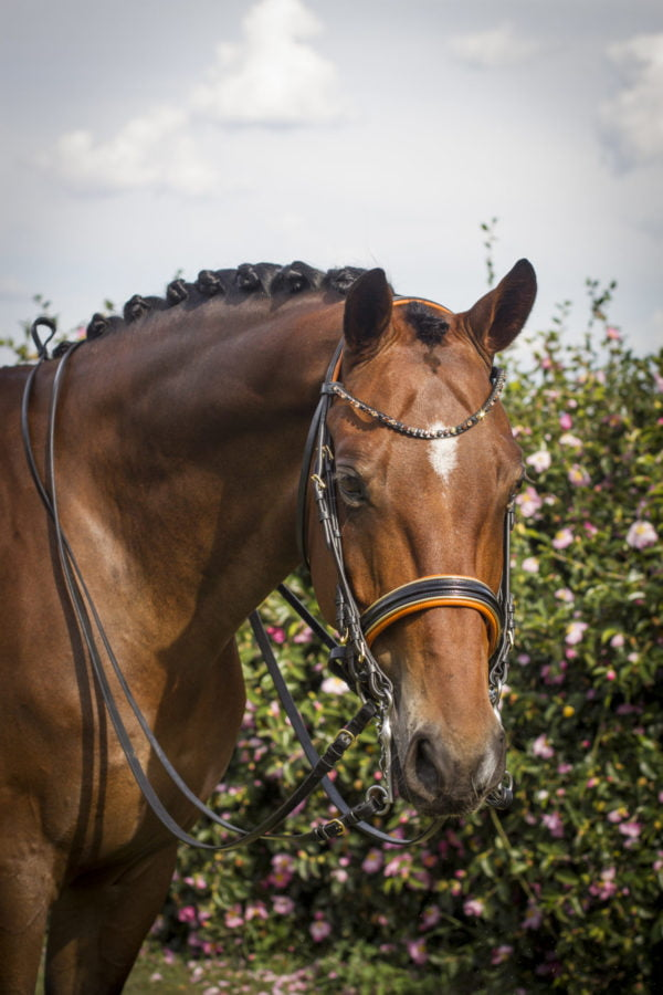 Orange bridle
